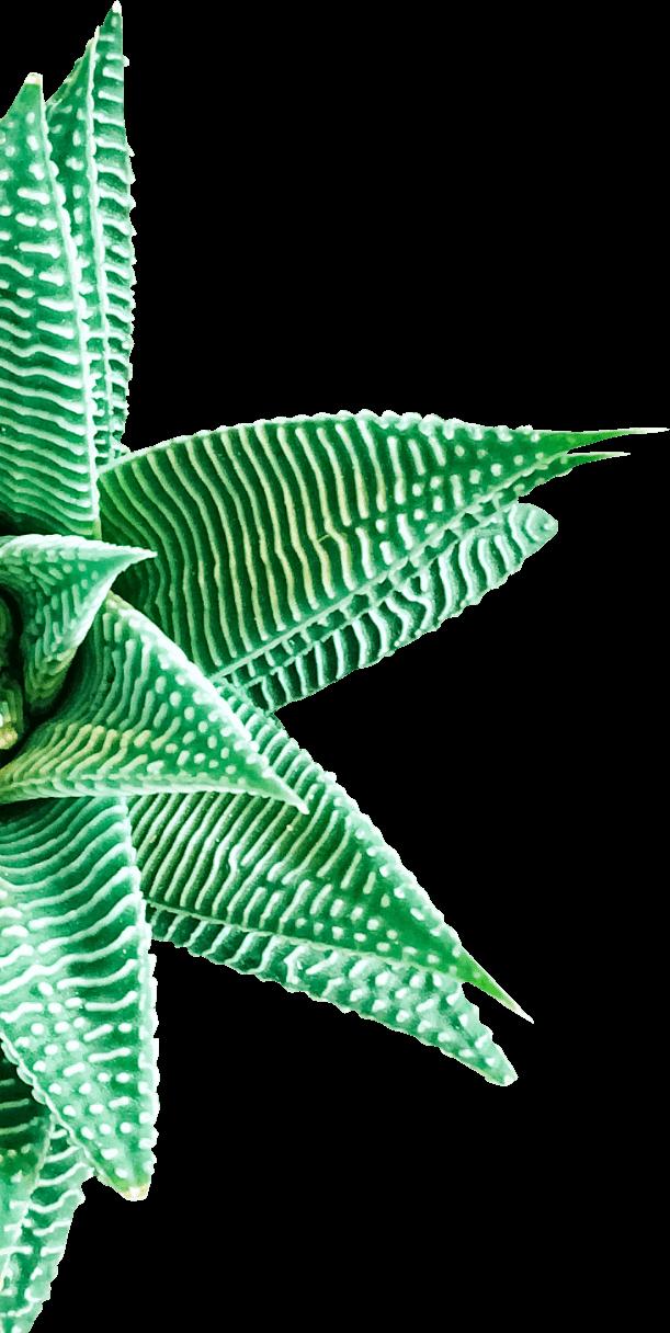 soins-esthetique-demi-plante