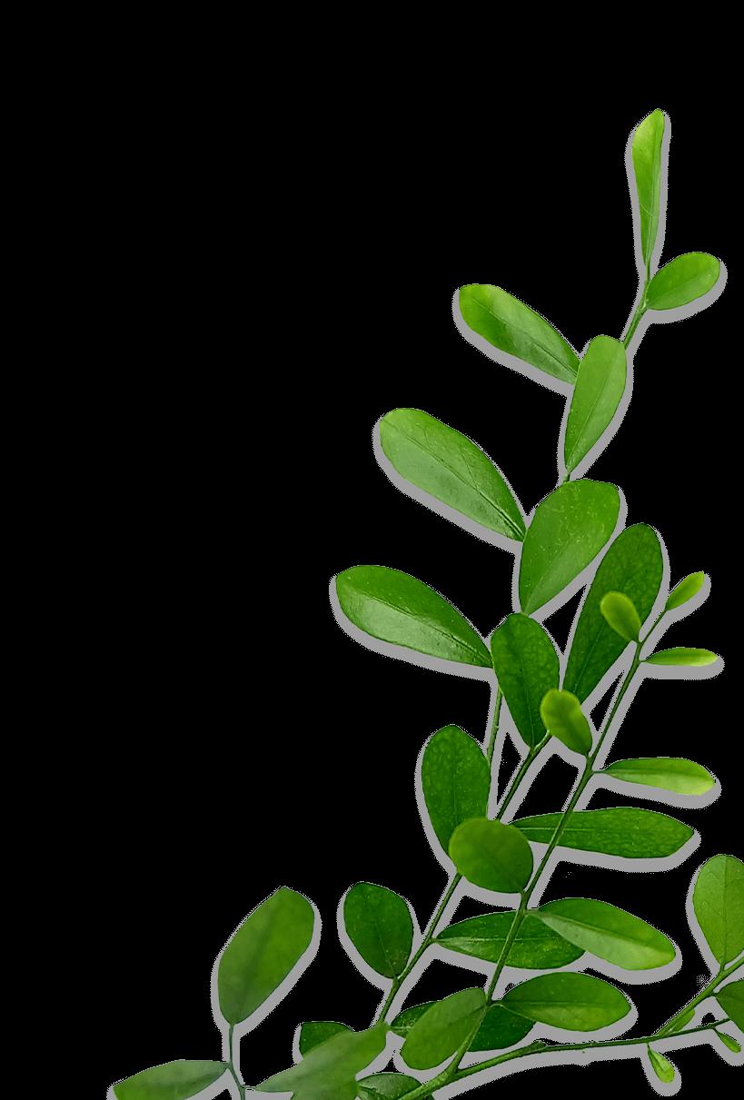 style-en-tete-contact-plante-bas