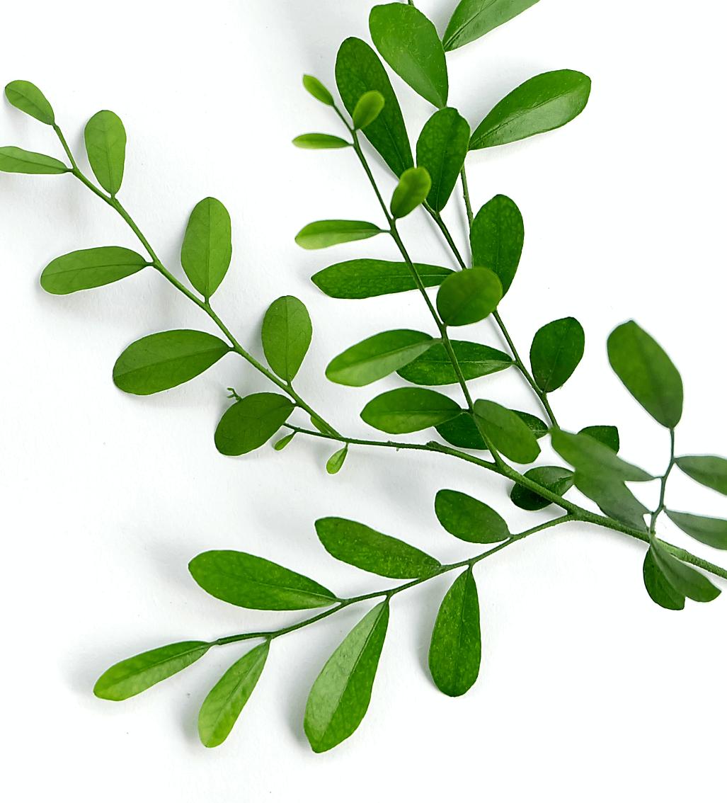 style-en-tete-contact-plante-haut